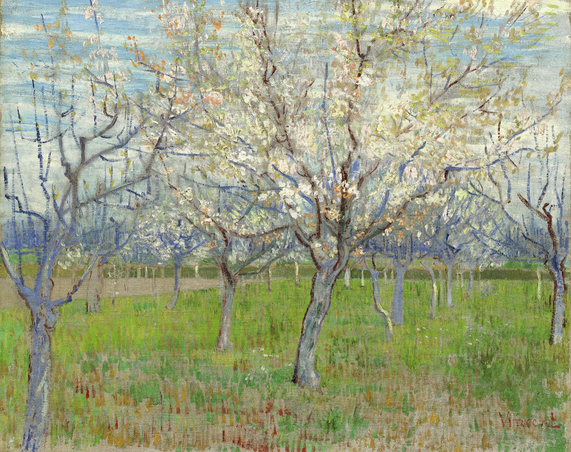 Apricot Trees in Blossom 1888 Van Gogh Print
